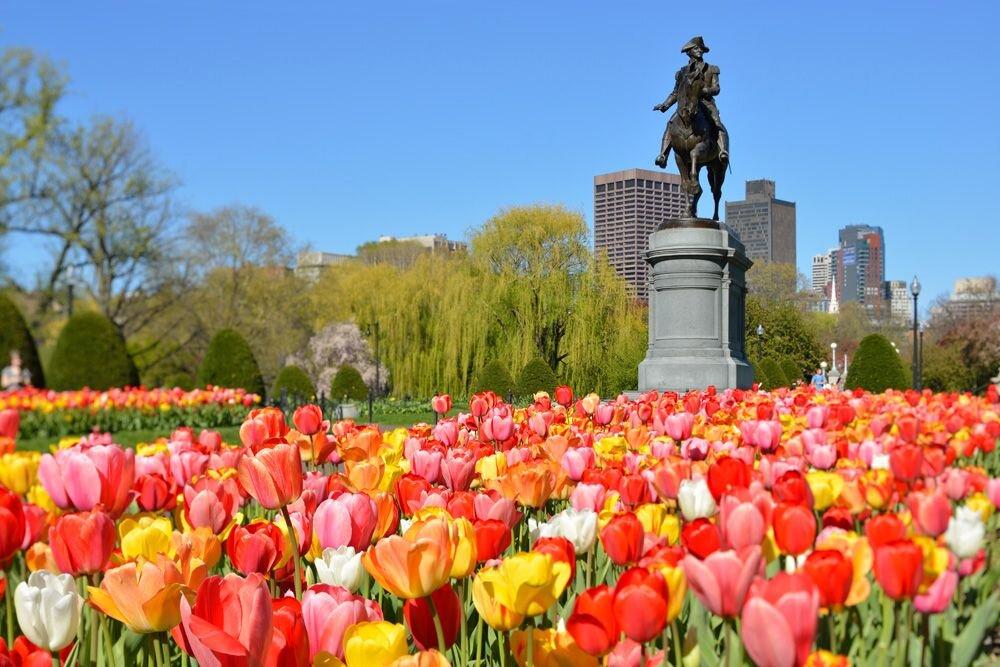 Boston Hakkında