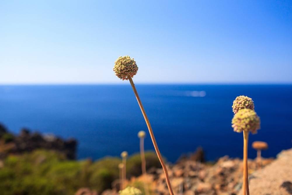 Pantelleria Adası