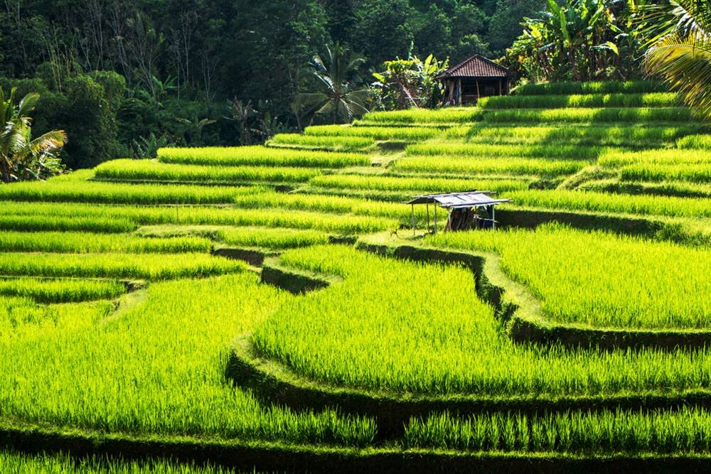 Tanrılar Adası Bali Turu