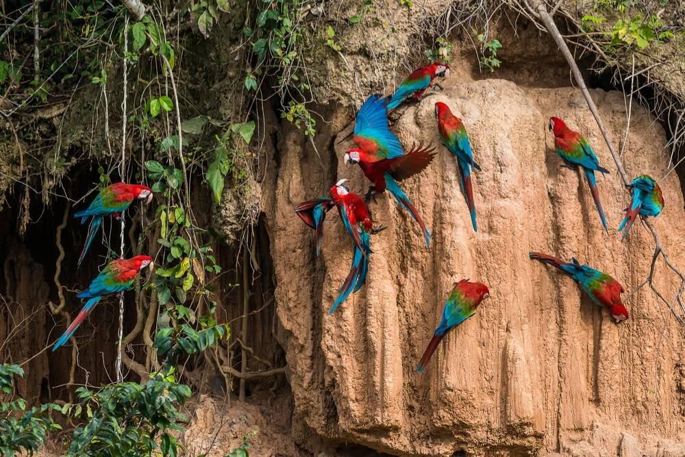 Peru - Bolivya - Şili - Amazon Turu Air France / KLM Hava Yolları ile 14 Gün